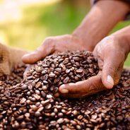 Smaakvolle koffie op het werk?